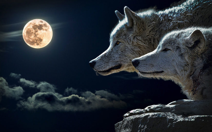 Schutz für die Wölfe